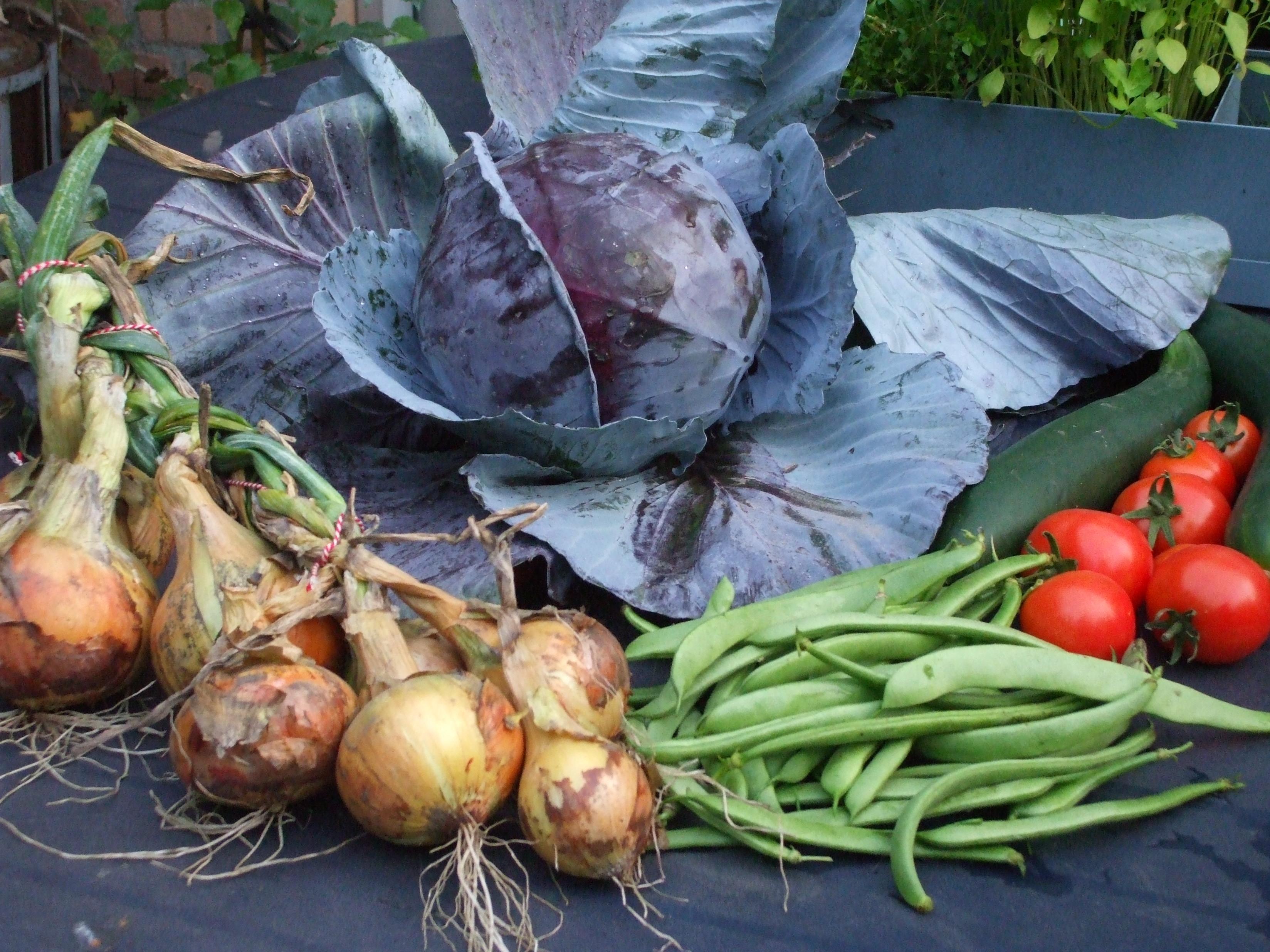 oogstfoto met rodekool, uien, sperziebonen en tomaten