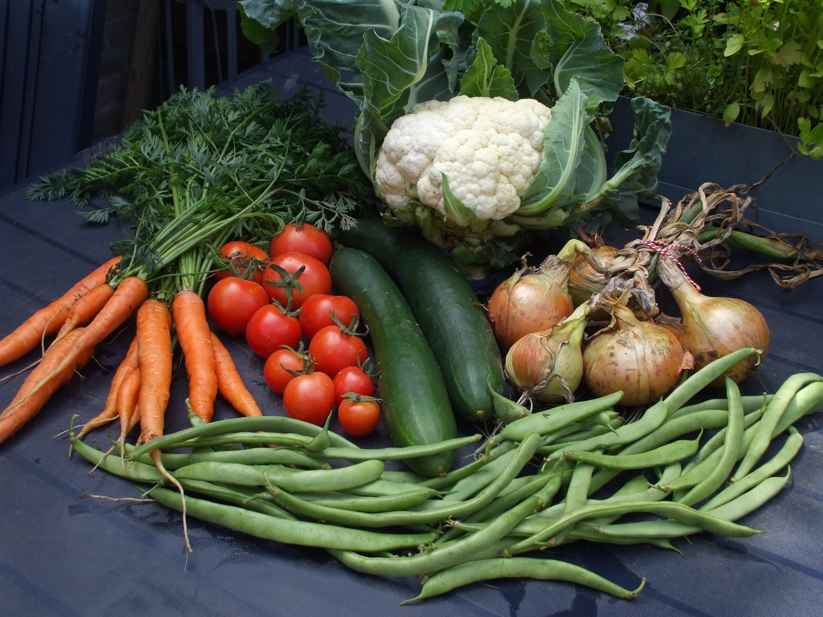 oogstfoto met wortels, tomaten, komkommer, bloemkool, uien en sperziebonen