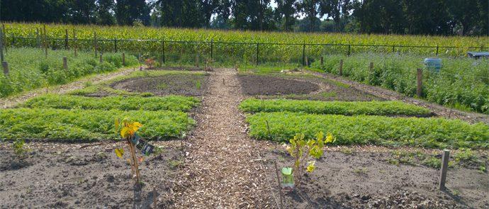 tuin met halfronde bedden