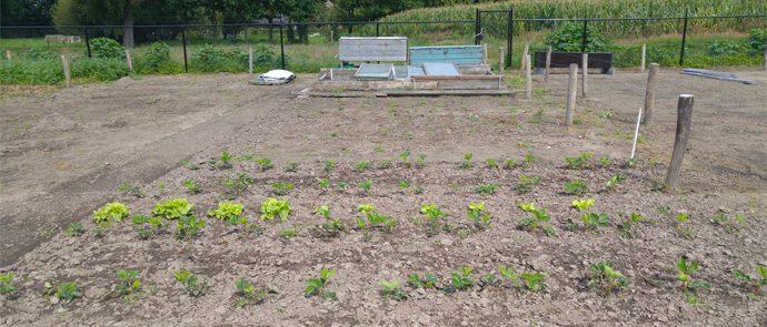 tuin met platte bak