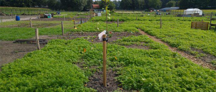 tuin met groenbemester en fruitboom
