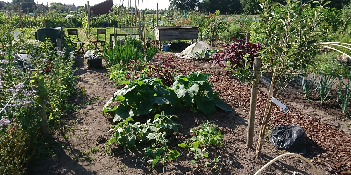 Kleine tuin van Hanneke