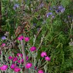 bloemen om bestuivers te lokken